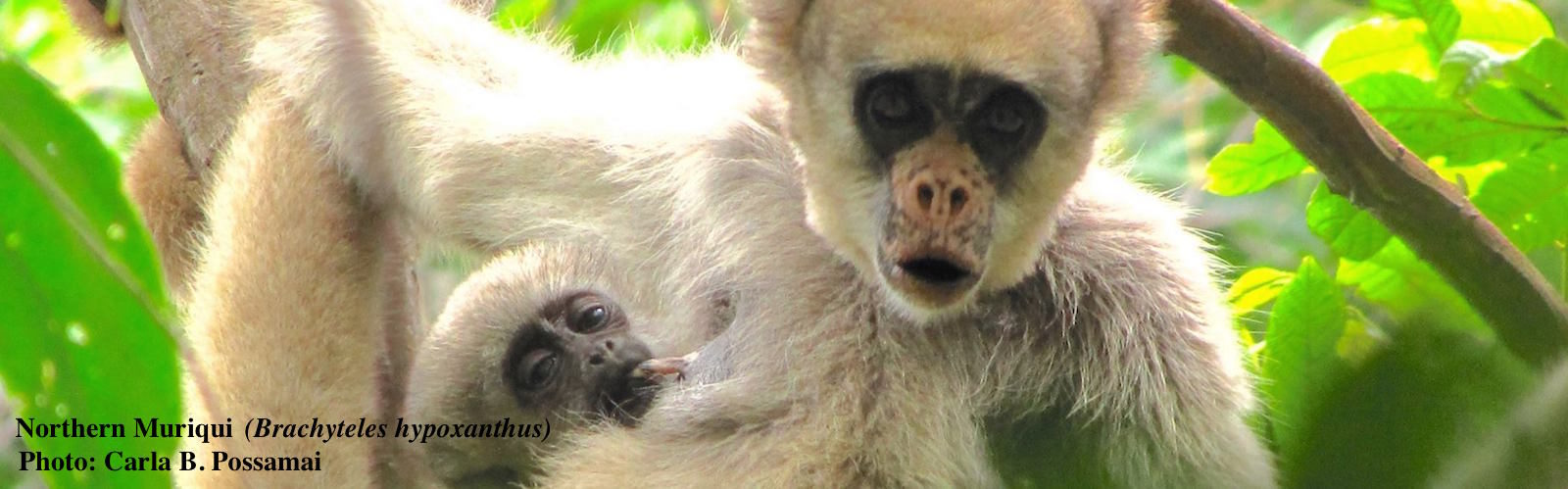 Northern Muriqui with baby