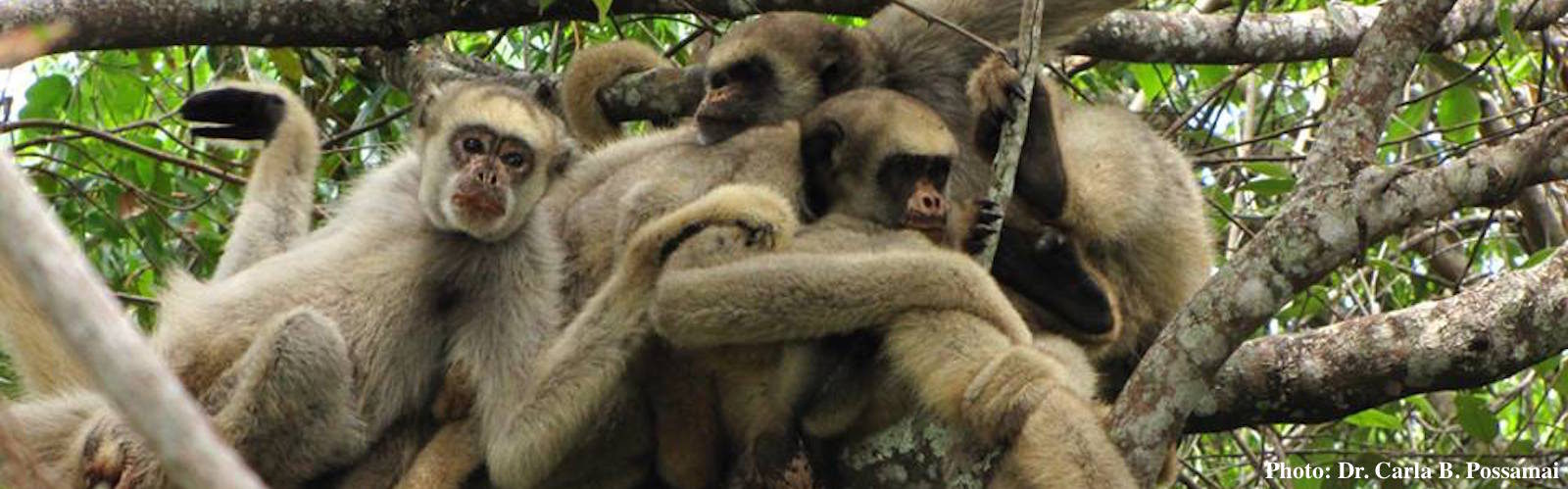 A group of northern muriquis hugging