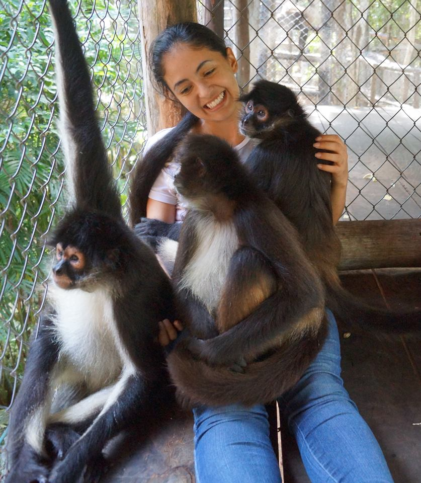 Visiting student, Mariana, plays with captive black handed spider monkeys
